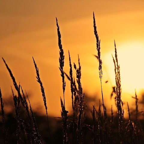 sunrise-3712483__480